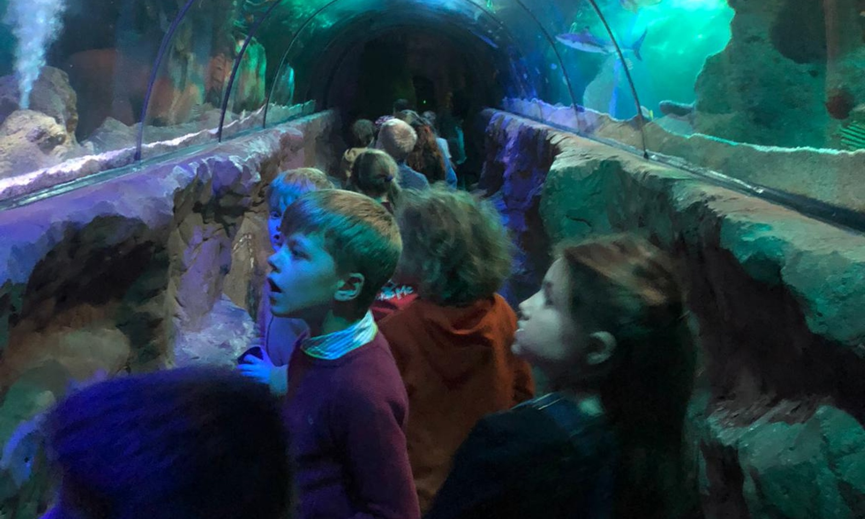 Lower Two visit Gt Yarmouth Sea Life Centre